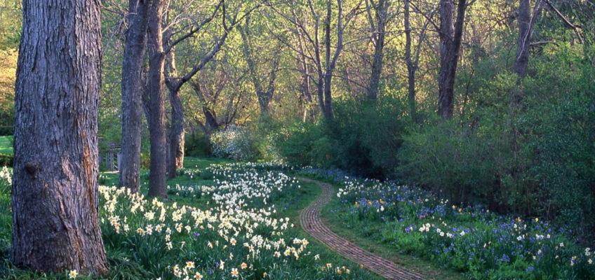 Mélisande's Allée, Dumbarton Oaks, Spring 2008. Photo by Richard Cheek